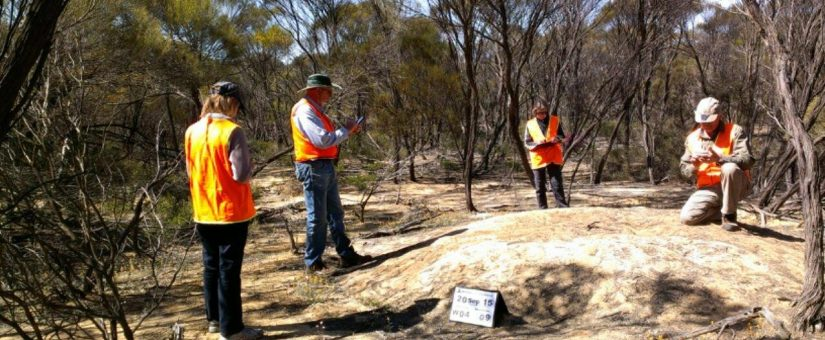 Monitoring with Tim Burnard (kneeling) National Malleefowl Co-ordinator from Casterton, Victoria.