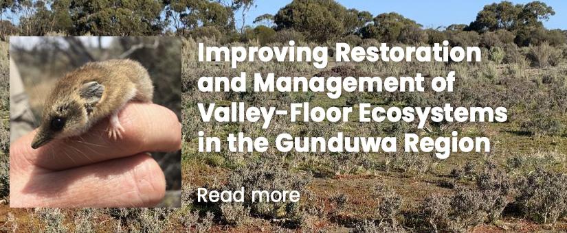 Improving Restoration and Management of Valley-Floor Ecosystems in the Gunduwa Region